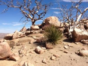 Robert's Desert Hike